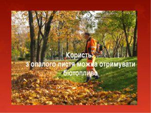 Користь: з опалого листя можна отримувати біотопливо