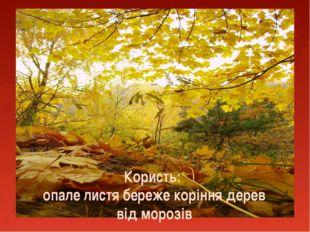Користь: опале листя береже коріння дерев від морозів