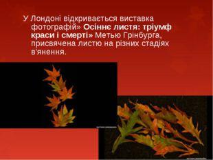 У Лондоні відкривається виставка фотографій» Осіннє листя: тріумф краси і см