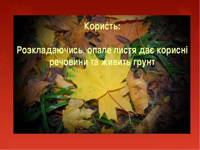 Користь: Розкладаючись, опале листя дає корисні речовини та живить грунт