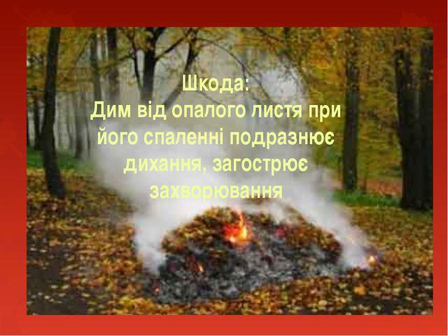 Шкода: Дим від опалого листя при його спаленні подразнює дихання, загострює з...