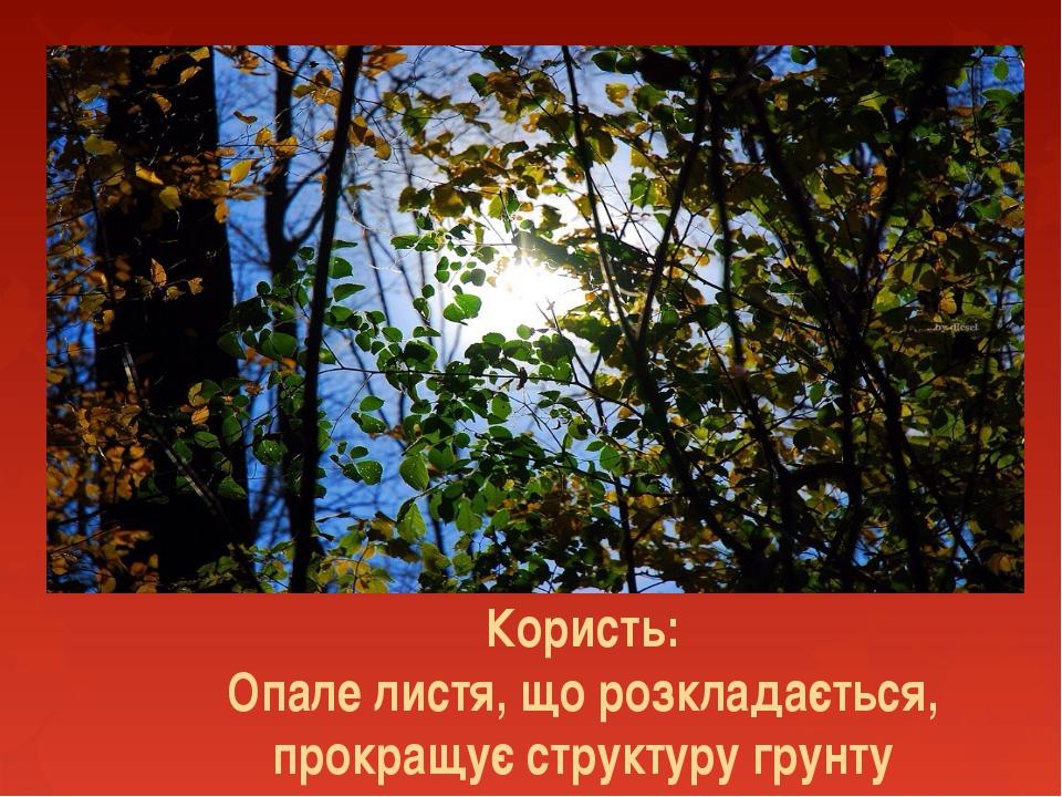 Користь: Опале листя, що розкладається, прокращує структуру грунту
