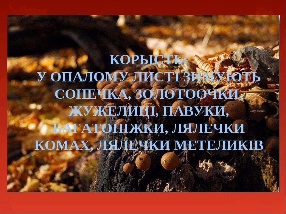 КОРЫСТЬ: У ОПАЛОМУ ЛИСТІ ЗИМУЮТЬ СОНЕЧКА, ЗОЛОТООЧКИ, ЖУЖЕЛИЦІ, ПАВУКИ, БАГАТ...