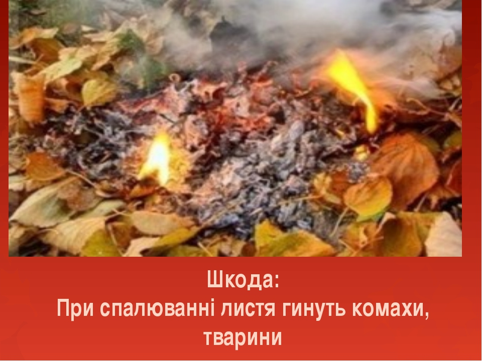 Шкода: При спалюванні листя гинуть комахи, тварини