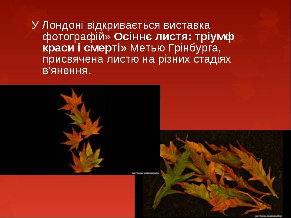 У Лондоні відкривається виставка фотографій» Осіннє листя: тріумф краси і см...