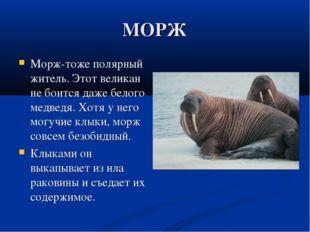 МОРЖ Морж-тоже полярный житель. Этот великан не боится даже белого медведя. Х