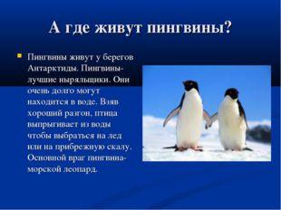 А где живут пингвины? Пингвины живут у берегов Антарктиды. Пингвины-лучшие ны