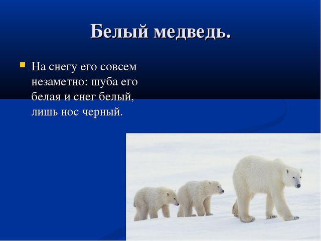 Белый медведь. На снегу его совсем незаметно: шуба его белая и снег белый, ли...