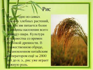 Рис Рис— одно из самых важных хлебных растений, так как им питается более по