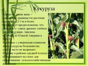 Кукуруза Кукуруза, такжемаис – однолетнее травянистое растение высотой до 2-