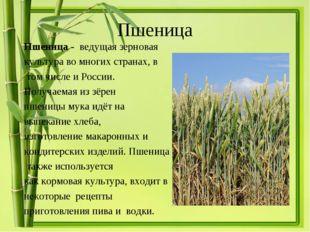 Пшеница Пшеница - ведущая зерновая культураво многих странах, в том числе и