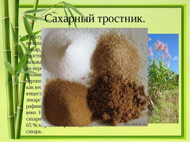 Сахарный тростник. Культура сахарного тростника началась в глубокой древности...