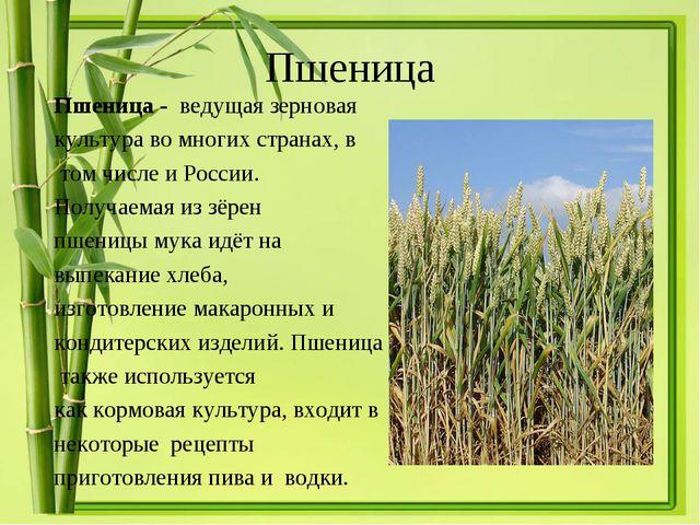 Пшеница Пшеница - ведущая зерновая культураво многих странах, в том числе и...