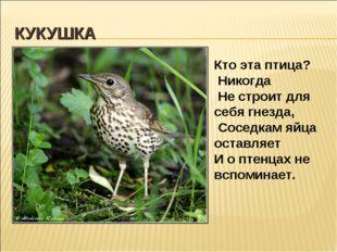 КУКУШКА Кто эта птица? Никогда Не строит для себя гнезда, Соседкам яйца остав
