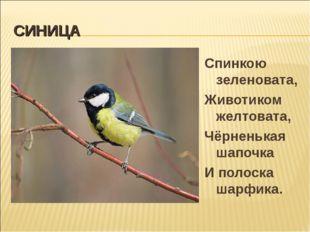 СИНИЦА Спинкою зеленовата, Животиком желтовата, Чёрненькая шапочка И полоска