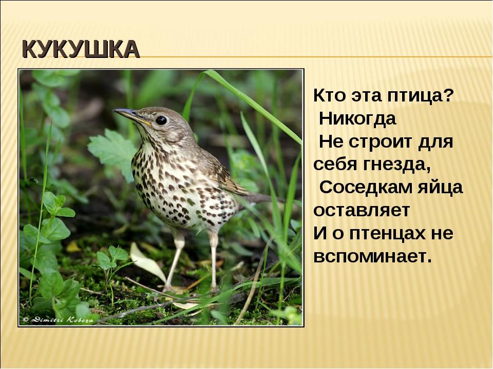 КУКУШКА Кто эта птица? Никогда Не строит для себя гнезда, Соседкам яйца остав...