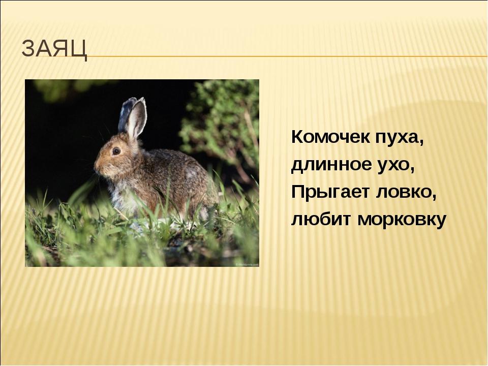 ЗАЯЦ Комочек пуха, длинное ухо, Прыгает ловко, любит морковку