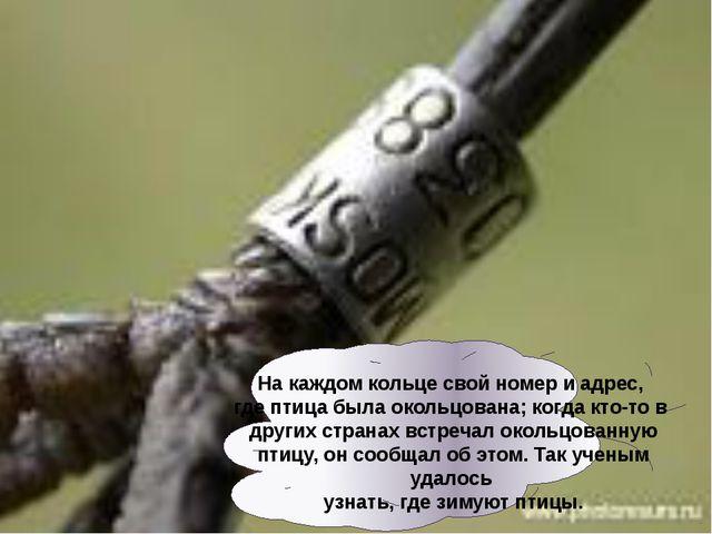 Накаждом кольце свой номер иадрес, где птица была окольцована; когда кто-т...