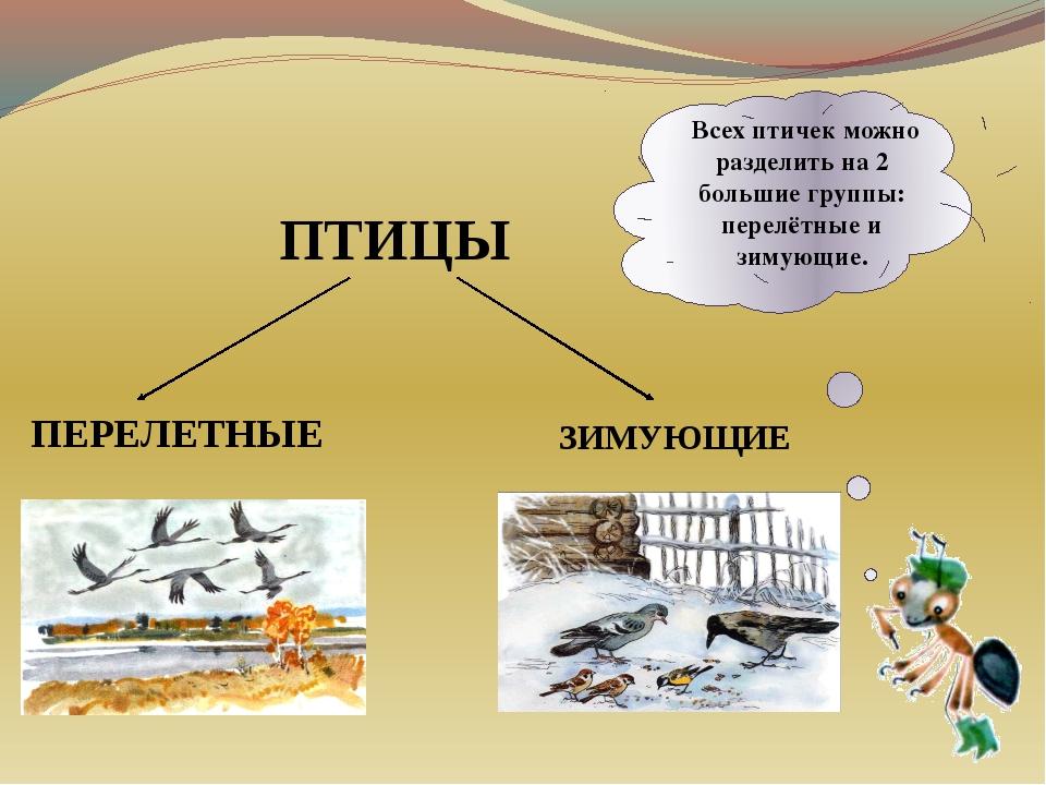 Всех птичек можно разделить на 2 большие группы: перелётные и зимующие. ПТИЦ...