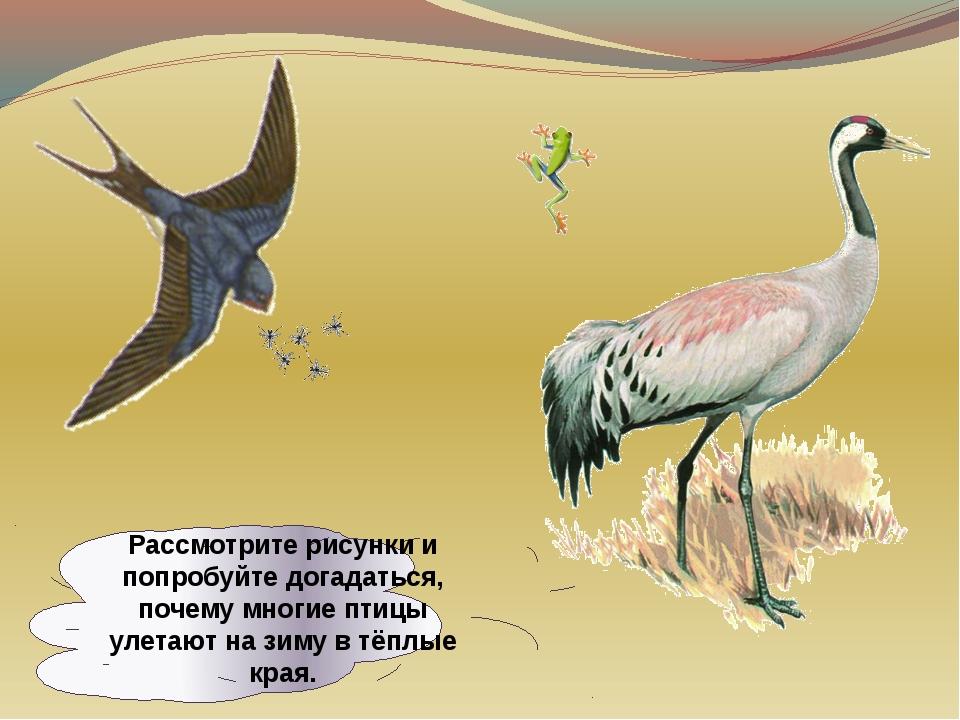 Рассмотрите рисунки и попробуйте догадаться, почему многие птицы улетают на з...