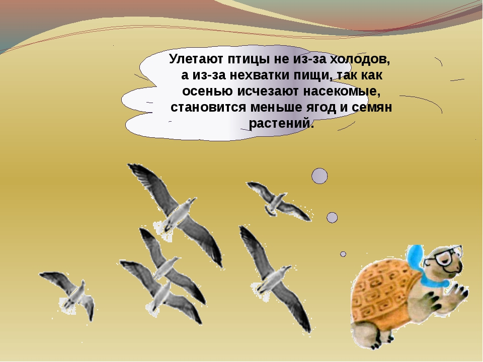 Улетают птицы не из-за холодов, а из-за нехватки пищи, так как осенью исчезаю...