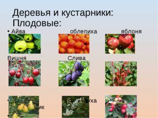 Деревья и кустарники: Плодовые: Айва облепиха яблоня Вишня Слива Барбарис Гру