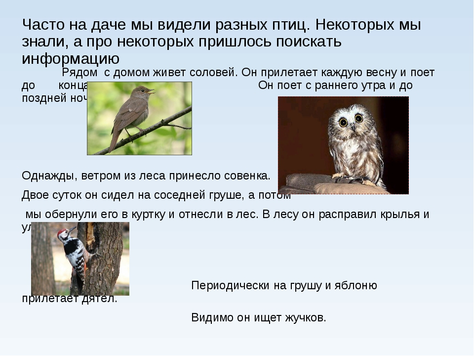 Часто на даче мы видели разных птиц. Некоторых мы знали, а про некоторых приш...
