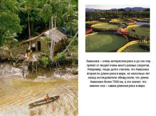 Амазонка – очень интересная река и до сих пор прячет от людей очень много раз