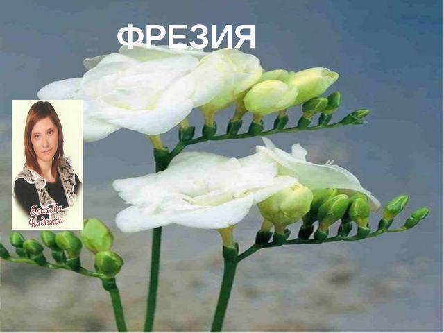 Фрезия ФРЕЗИЯ