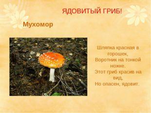 Мухомор Шляпка красная в горошек, Воротник на тонкой ножке. Этот гриб красив