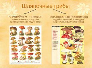 Шляпочные грибы съедобные те, которые можно готовить сразу, без предварительн