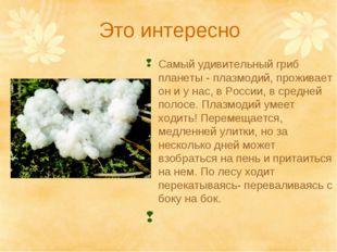 Это интересно Самый удивительный гриб планеты - плазмодий, проживает он и у н