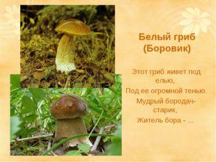 Белый гриб (Боровик) Этот гриб живет под елью, Под ее огромной тенью. Мудрый