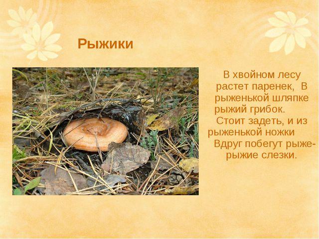 Рыжики В хвойном лесу растет паренек, В рыженькой шляпке рыжий грибок. Стоит...