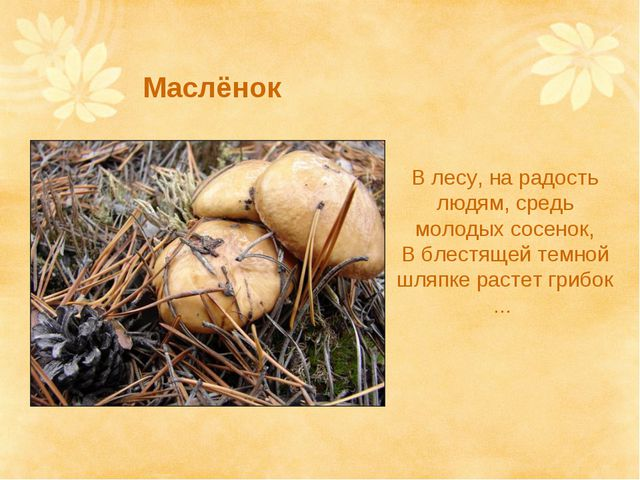 Маслёнок В лесу, на радость людям, средь молодых сосенок, В блестящей темной...