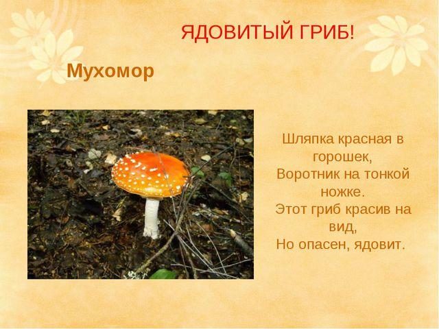 Мухомор Шляпка красная в горошек, Воротник на тонкой ножке. Этот гриб красив...
