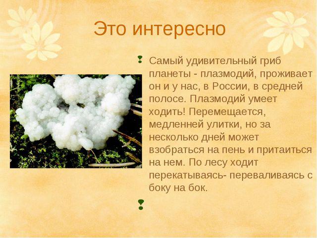 Это интересно Самый удивительный гриб планеты - плазмодий, проживает он и у н...