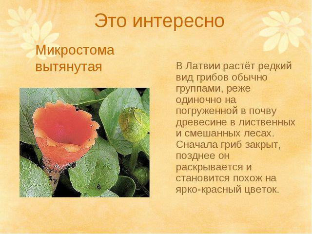 Это интересно В Латвии растёт редкий вид грибов обычно группами, реже одиночн...