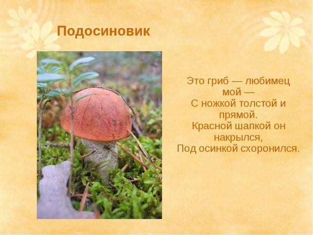 Подосиновик Это гриб — любимец мой — С ножкой толстой и прямой. Красной шапко...