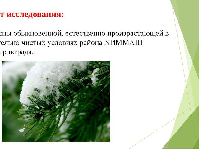 Объект исследования: хвоя сосны обыкновенной, естественно произрастающей в от...