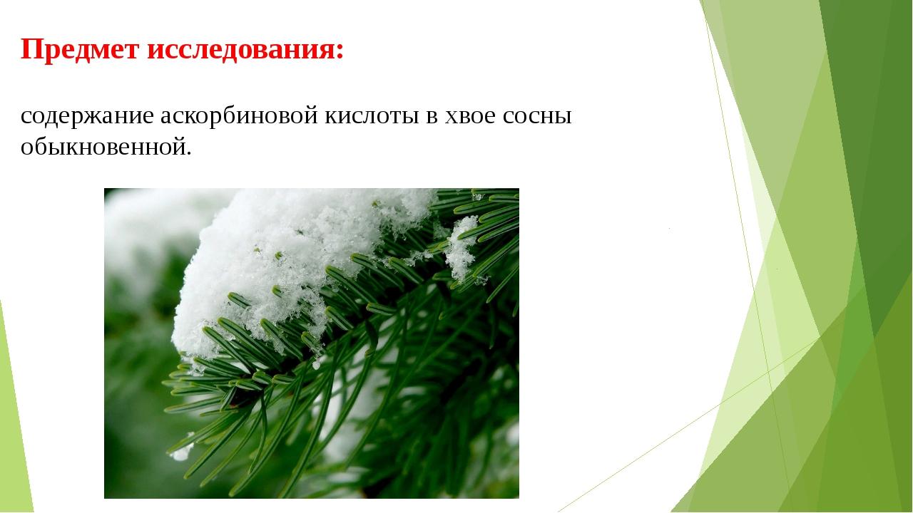 Предмет исследования: содержание аскорбиновой кислоты в хвое сосны обыкновенн...