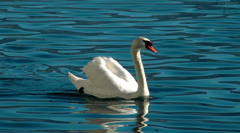 http://www.animalsglobe.ru/wp-content/uploads/2011/09/%D0%BB%D0%B5%D0%B1%D0%B5%D0%B4%D1%8C-3.jpg