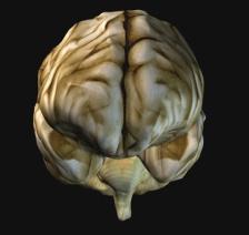 D:\РАЗРАБОТКИ УРОКОВ\8 класс\Головной мозг\L14_07_p1.jpg