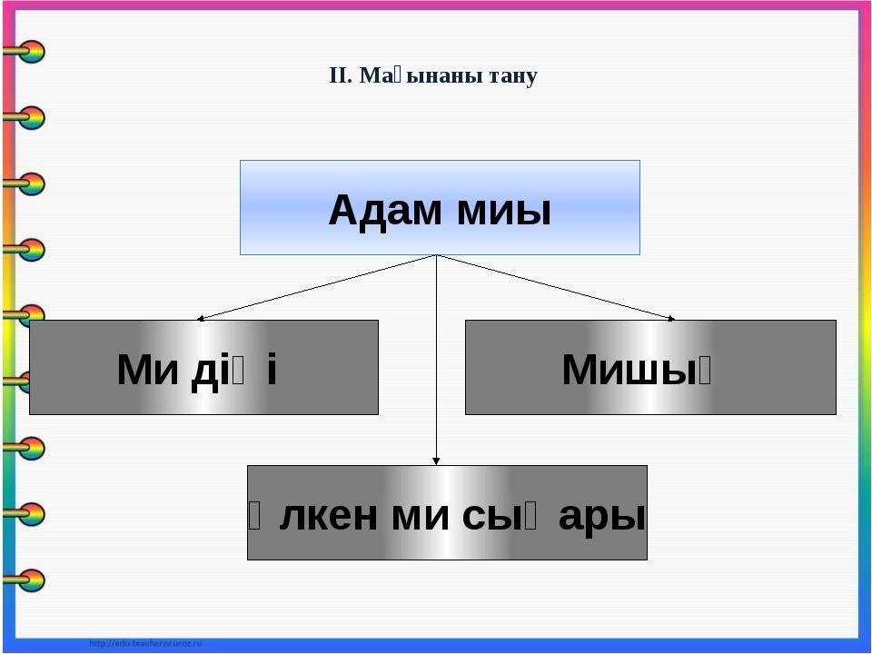 ІІ. Мағынаны тану Адам миы Үлкен ми сыңары Мишық Ми діңі