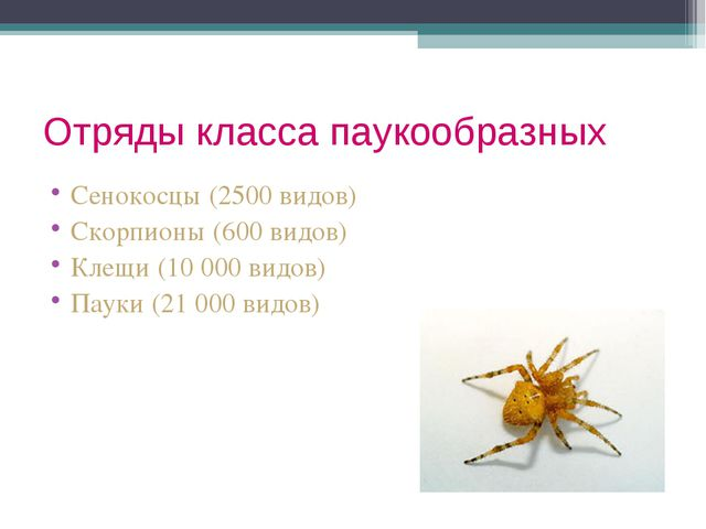 Отряды класса паукообразных Сенокосцы (2500 видов) Скорпионы (600 видов) Клещ...