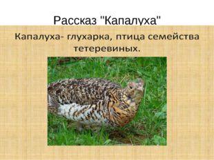 """Рассказ """"Капалуха"""""""