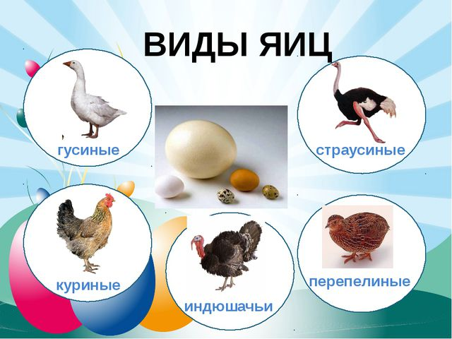ВИДЫ ЯИЦ гусиные куриные индюшачьи перепелиные страусиные