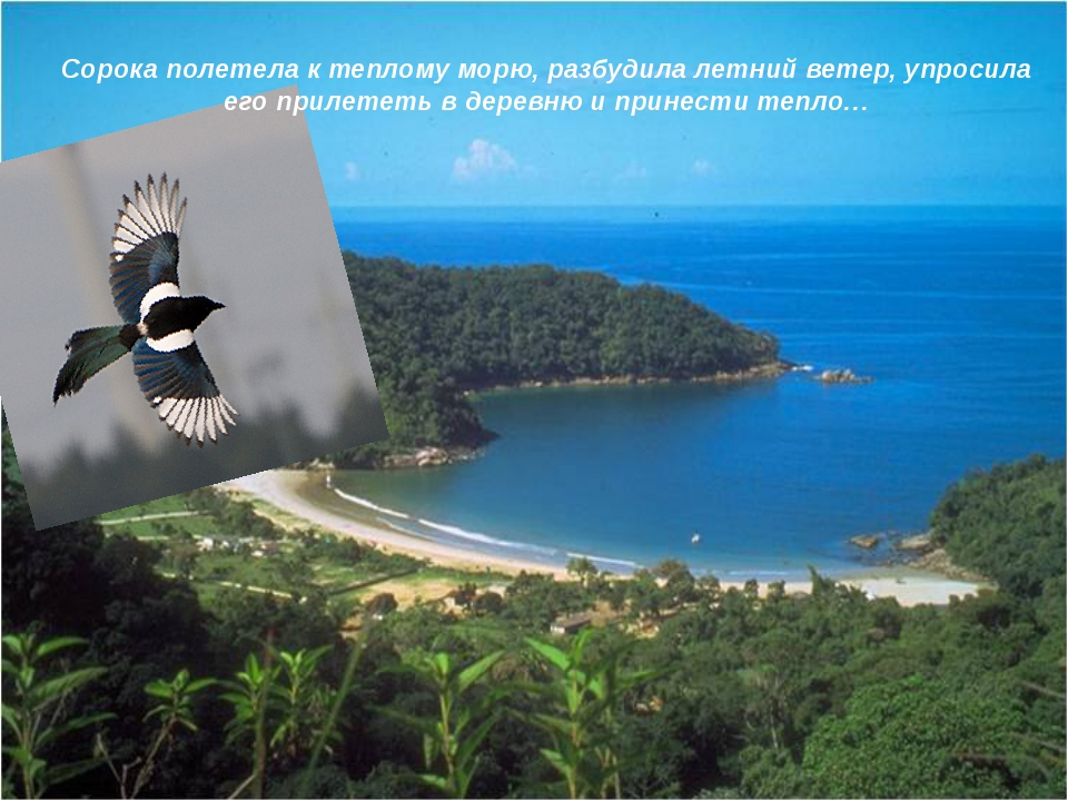 … Сорока полетела к теплому морю, разбудила летний ветер, упросила его прилет...
