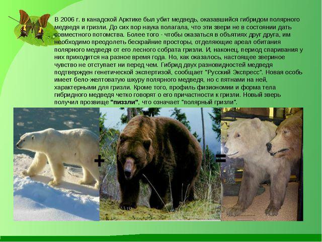 В 2006 г. в канадской Арктике был убит медведь, оказавшийся гибридом полярно...