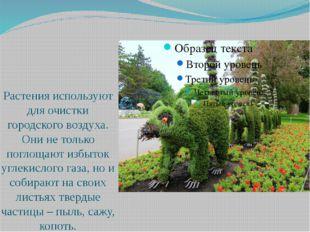 Растения используют для очистки городского воздуха. Они не только поглощают